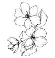 apple blossom floral botanical flower