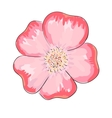 Dog rose flower vector image vector image