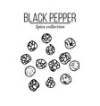 spice collection black pepper hand drawn vector image