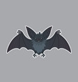 bat animal of bat-eared grey vector image vector image