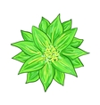 Stylized green flower vector image vector image