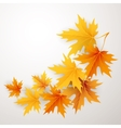 Autumn maples falling leaves background vector image