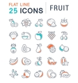 Set Flat Line Icons Fruit vector image vector image