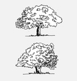 trees with leaves in vector image vector image