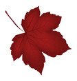 image of realistic red maple leaf isolated on vector image vector image