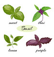 set of basil leaves different types of basil vector image vector image