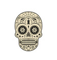 decorative sugar skull vector image
