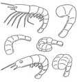 set of shrimp vector image vector image