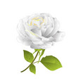 flower white rose on a white background twig vector image vector image