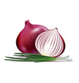 fresh whole and sliced red onion bulbs with vector image vector image