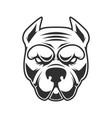 funny pitbull terrier head design element vector image