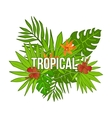 Summer tropical background of palm leaves flower vector image