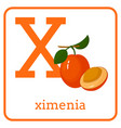 an alphabet with cute fruits letter x ximenia vector image vector image