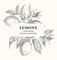 lemon hand drawn frame layout vector image vector image