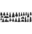 silhouettes spruce and pine doodle set vector image