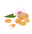 almonds nuts in skins and peeled with leaf and vector image