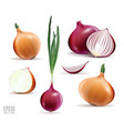 collection of onions with slices isolated vector image vector image