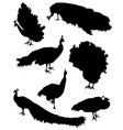 Collection of silhouettes of peacocks vector image vector image