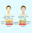 effect of environment on the skin diagram vector image vector image
