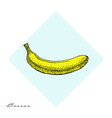 fruit menu - banana - hand-drawn objects vector image vector image