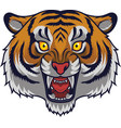 angry tiger head mascot vector image