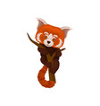 chinese red panda hanging on a tree branch cute vector image