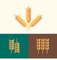 set flat design wheat design template vector image vector image