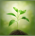 sprout in soil vector image