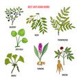 best anti-aging herbs collection vector image vector image