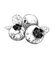 hand drawn sketch of blueberry in black isolated vector image vector image