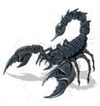 scorpion bug horoscope zodiac detail element vector image
