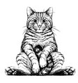 cat sticker for walls vector image vector image