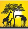 Giraffes on the African savannah vector image vector image