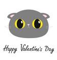 happy valentines day british shorthair cat round vector image