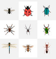 set of bug realistic symbols with fly ladybug vector image