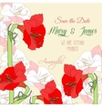 Background with red pink amaryllis vector image