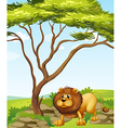 A lion near a big tree in the hills vector image vector image