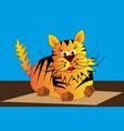 cat tiger tomcat vector image