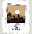 wild africa animals vector image vector image