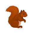 red squirrel wild forest rodent animal vector image vector image