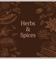 sketch herbs and spices template vector image vector image