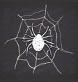spider and web vintage label hand drawn sketch vector image