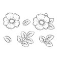 hand drawn roses hip flowers set with leaves vector image vector image