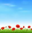 Poppy field vector | Price: 1 Credit (USD $1)