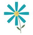 daisy flower decoration image vector image