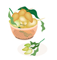A Brown Basket of Sweet Mango Fruits vector image vector image