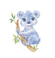 koala watercolor vector image vector image