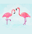 pink flamingo couple on blue background vector image