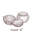 drawing coconut oil vector image