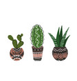 set colorful flat cactus and succulent in pots vector image vector image
